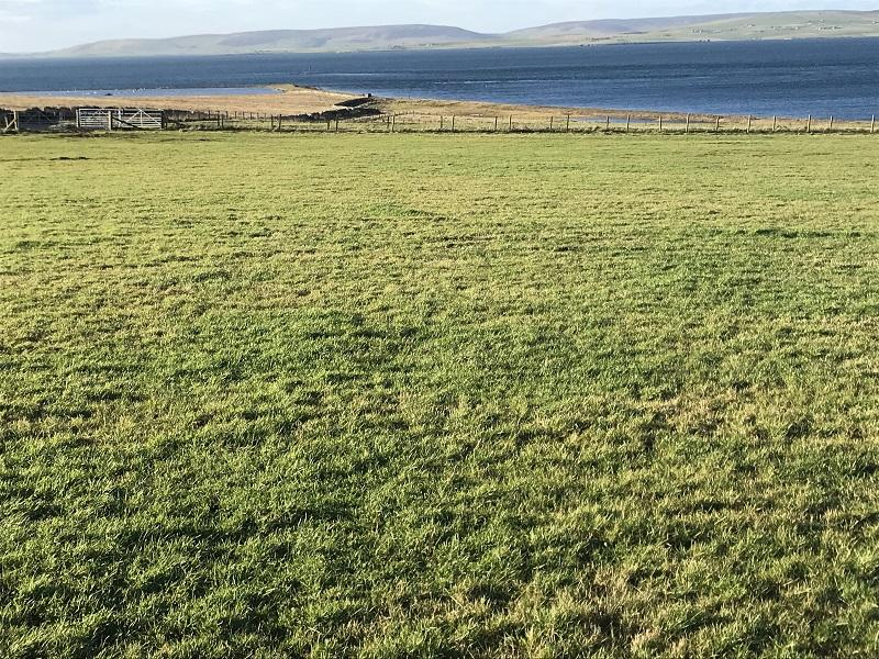 Field 3 looking west towards Mainland Orkney