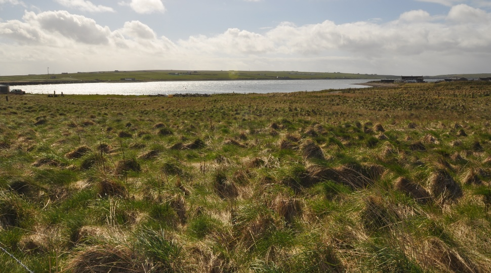 2.25 Acres Or Thereby Of Development Land, Burnbank, Burray Village, KW17 2SS