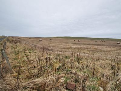 12.497 acres or thereby at Holland, Sanday, KW17 2BA
